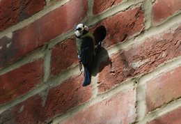 Bird_brick_houses