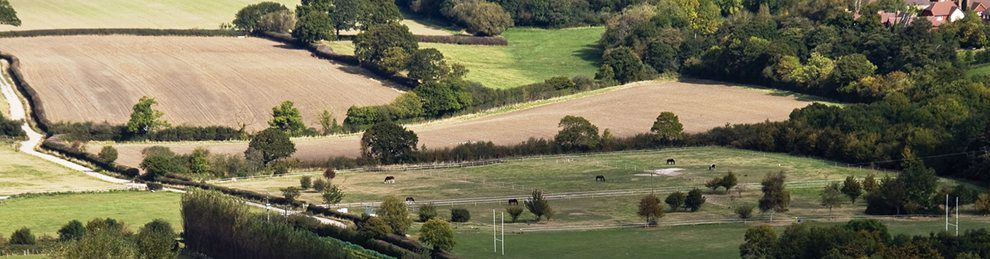 Rolling fields with cows around Plumpton College