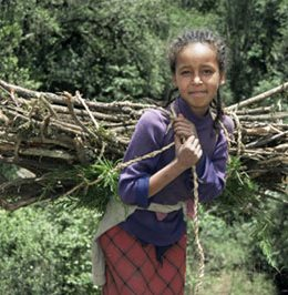 VJ-girl-carrying-fuel-wood-bundle-on-her-back-chilima-forest-ethiopia-africa