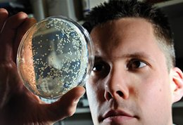Man looking at culture on petri dish